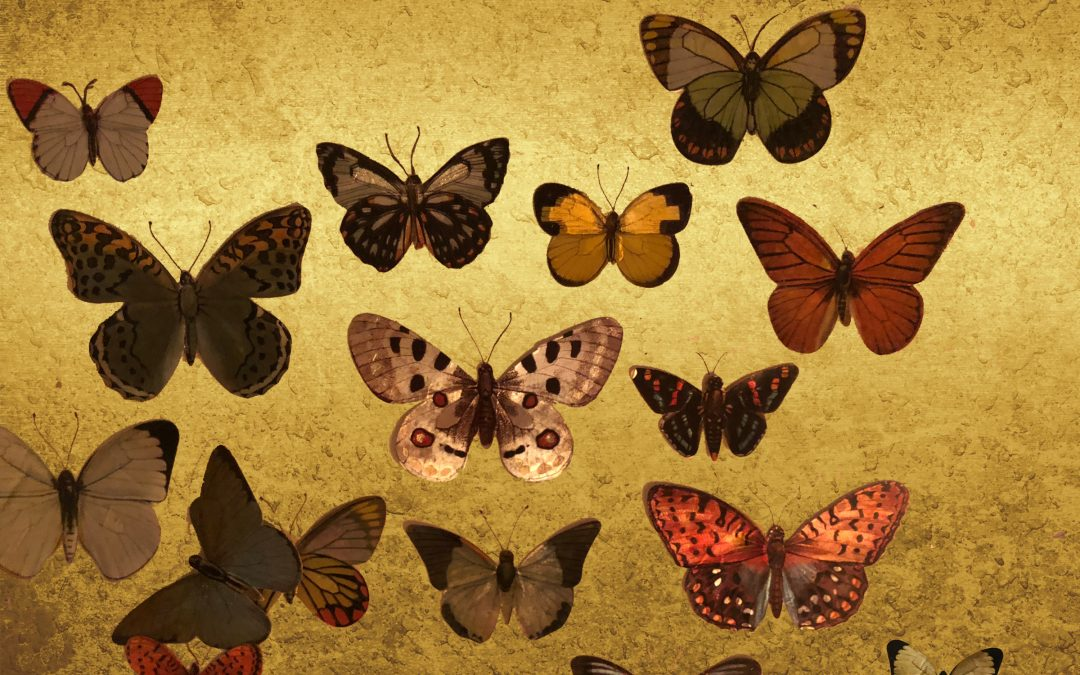 """Annie Lennox releases surprise EP """"Lepidoptera"""" to accompany  MASS MoCA exhibition."""