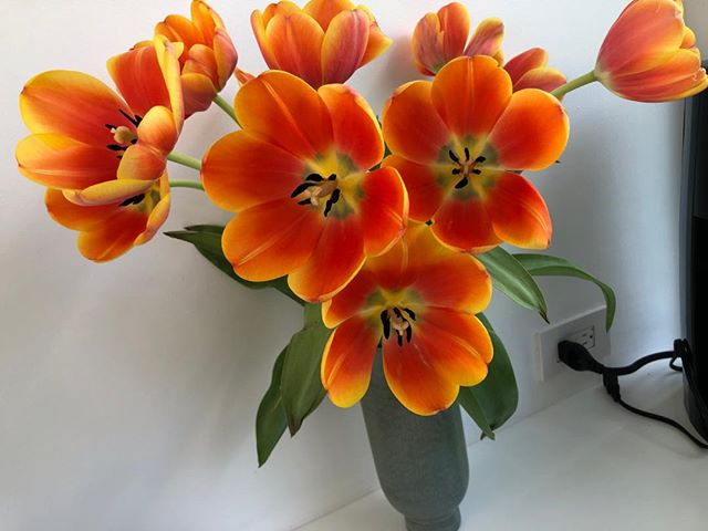 Just sharing the splendour of these beautiful tulips, as they've opened up to this glorious display!